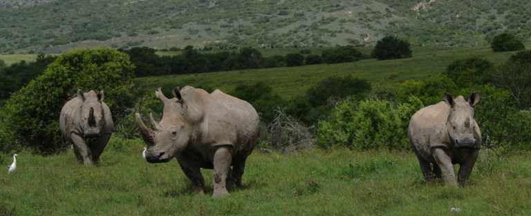 Nova Labs Forms UAV Team to Help Fight Rhino Poaching in South Africa